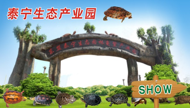 Taining turtle ASEAN Industrial Park,Testudinate Industrial Park Taining group,Agricultural development project of Taining group